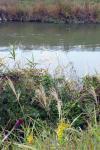秋装の新郷瀬川