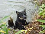 池からなかなか上がれないワグマ