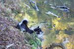 池に飛び込む意欲満点