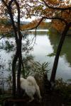 カモを見つめるノンノワグマ2