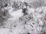 雪原のノンノ2