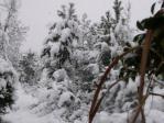 団地東野原 雪景色