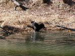 池に入ろうとしているワグマ