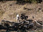 池を見ているノンノとワグマ