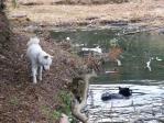 池に浸かったり ワグマ