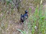 20141105野原を疾駆のワグマ