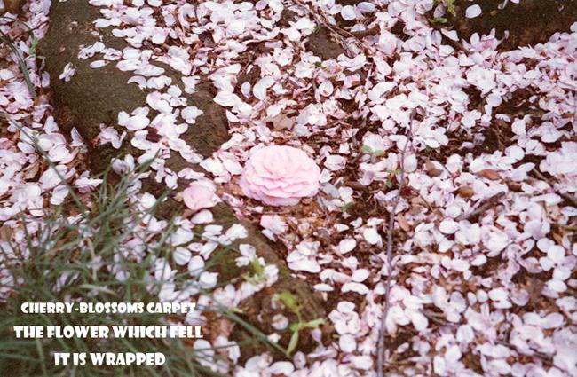 Cherry-blossoms carpet 3