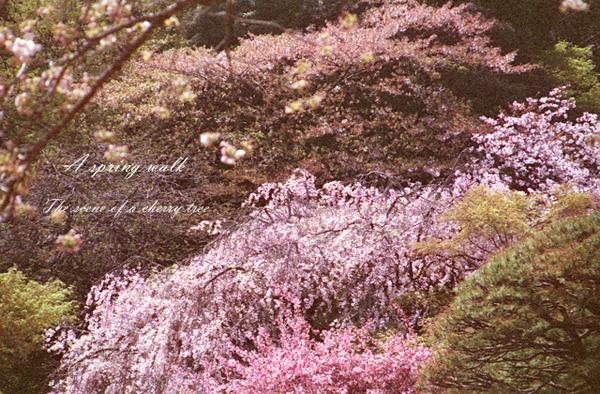 A spring walk 5