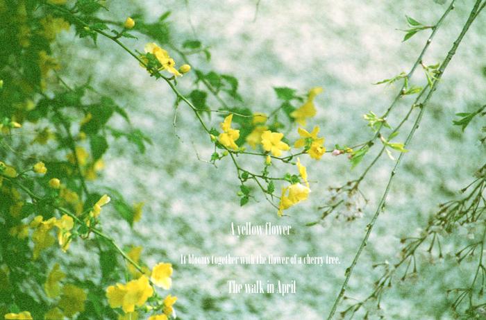 A yellow flower 2