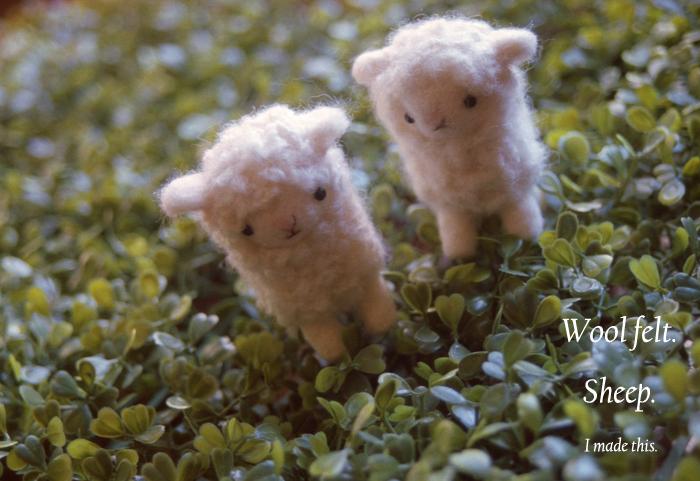 Wool felt4