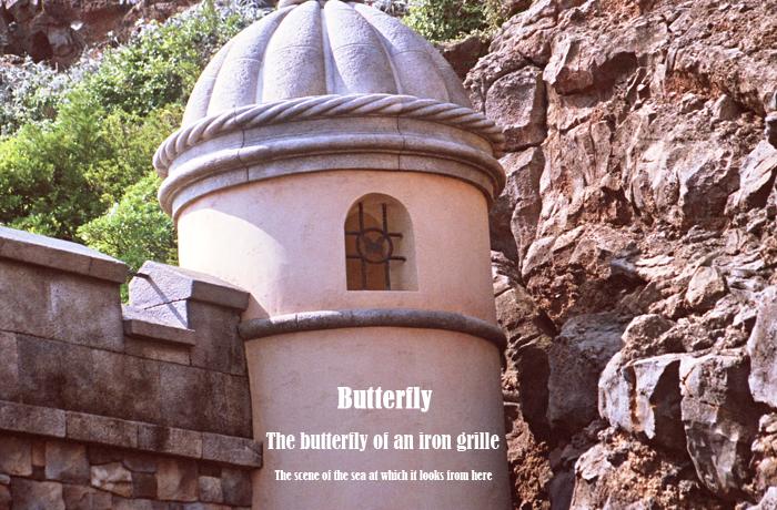 Butterfly_20121007201857.jpg