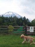 富士山曇り1