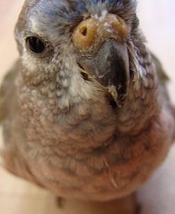 ココの黒目