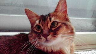 猫の森キャットシッター