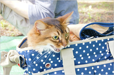 猫ピクニック