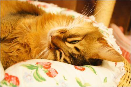 猫ベットでリラックス