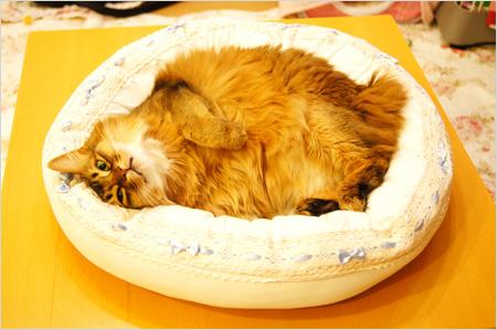 猫ベット大好き