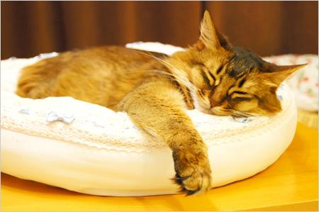 猫ベット好き