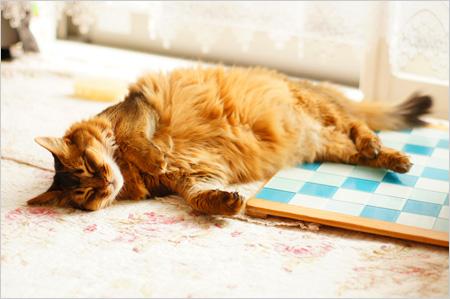 猫の寝る姿