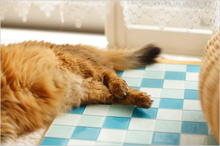 猫のクロスおみ足