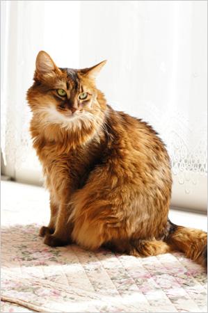 鹿児島・猫神さまに感謝。