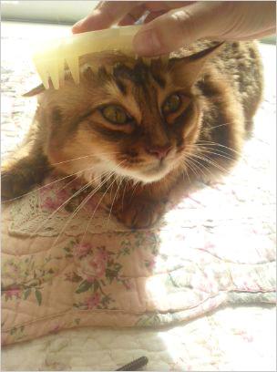猫の森キャットレポート2
