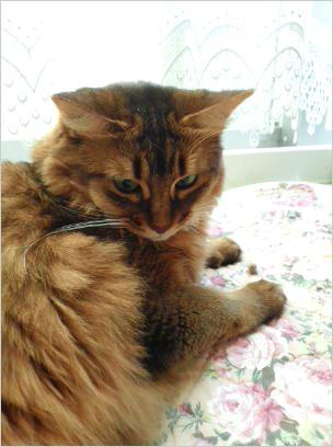 猫の森キャットレポート1