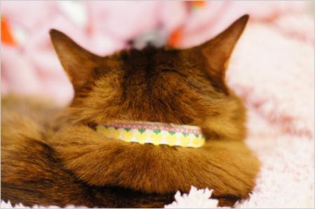 手作り猫首輪を試着するモンさん