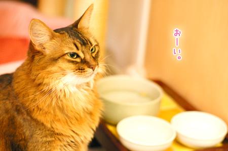 猫ごはんのおねだりg