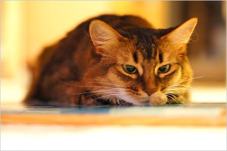 野性的な猫