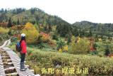 弥陀ヶ原遊歩道~180度紅葉です!