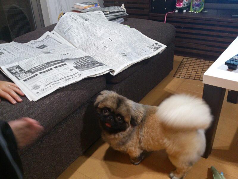 fc2blog_20120614225756acb.jpg