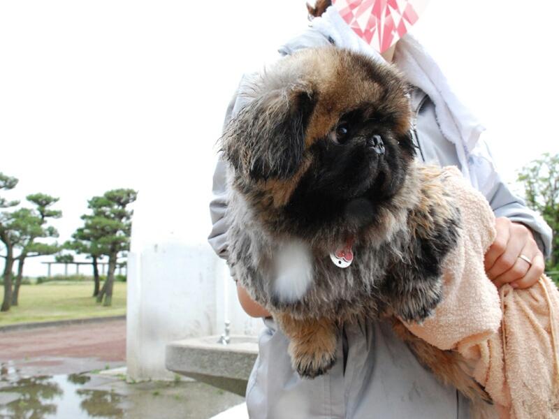 fc2blog_20120617223424047.jpg