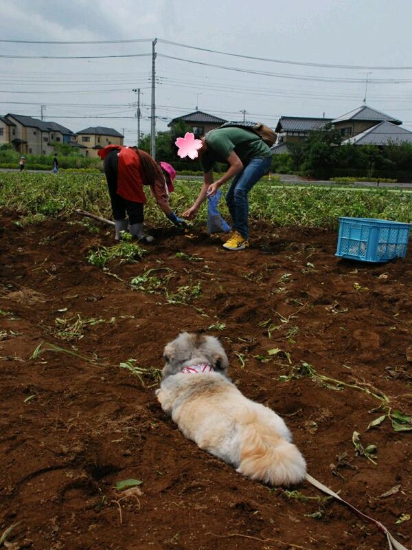 fc2blog_2012062319421198e.jpg