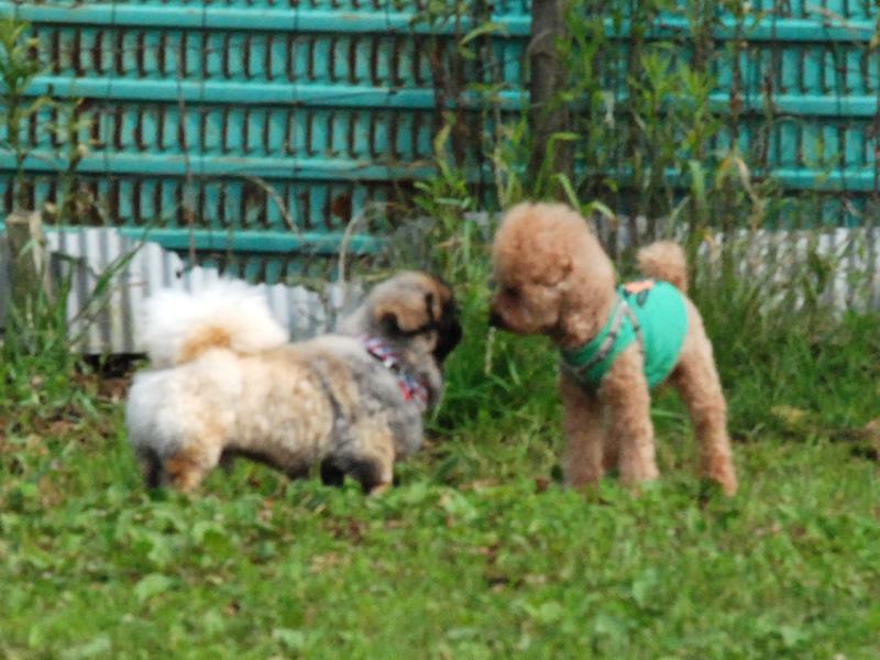 fc2blog_20120624000444224.jpg