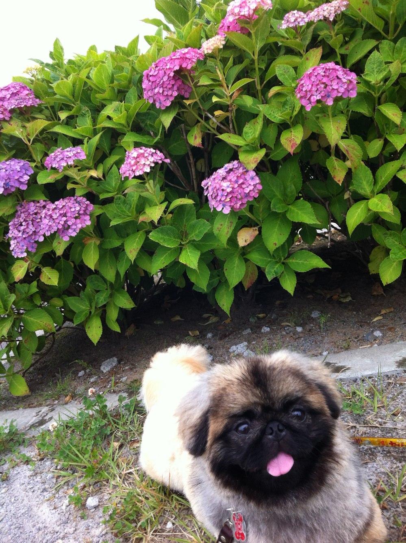 fc2blog_201206282220284a6.jpg