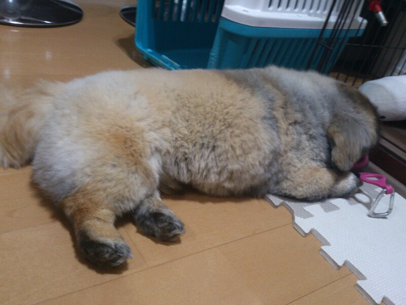 fc2blog_20120706214402c2a.jpg