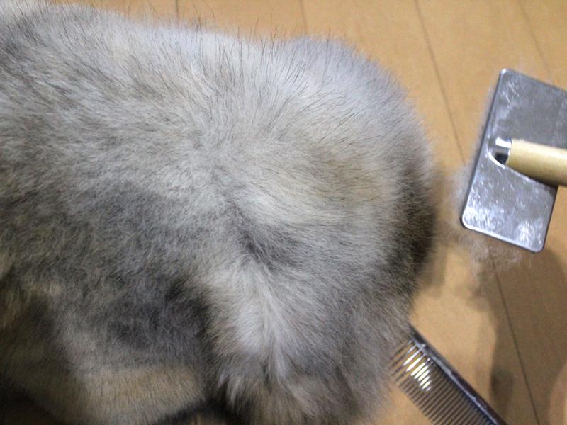 fc2blog_201207092126579da.jpg
