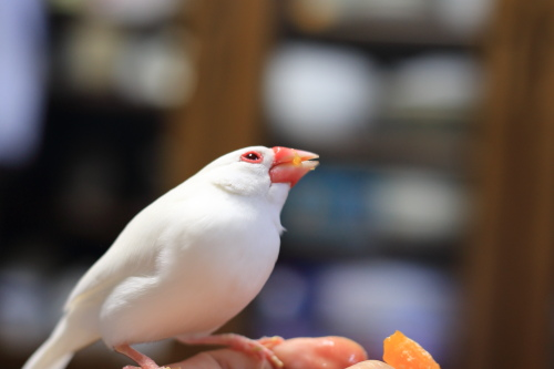 mikann daisuki dakedo tenouedesika tamenai (3)