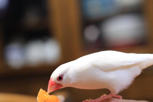 mikann daisuki dakedo tenouedesika tamenai (1)