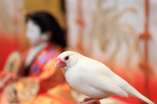 otituitara daijoubu mitai (3)