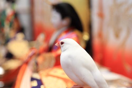 otituitara daijoubu mitai (1)
