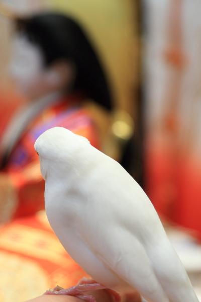 otituitara daijoubu mitai (2)