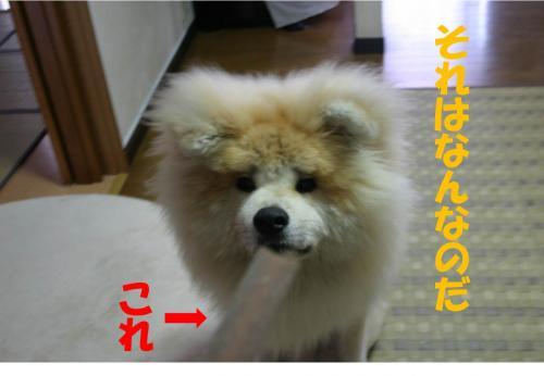 120820-12_convert_20120819213532.jpg