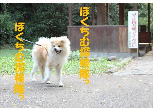 s-121116-6.jpg