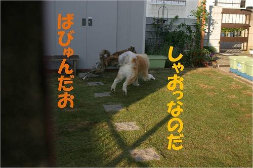 s-121125-1.jpg