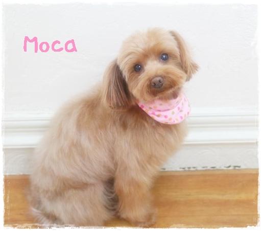 moca5_20130214140729.jpg