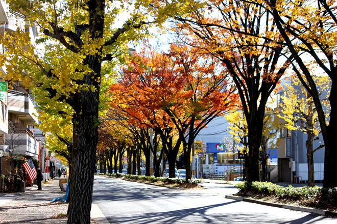 s10-shirakawa-1328x.jpg