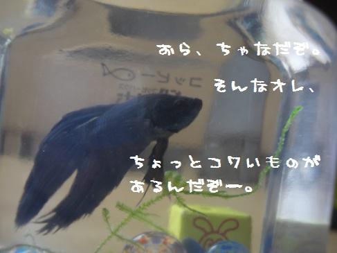 フントウ_チャナ(1)