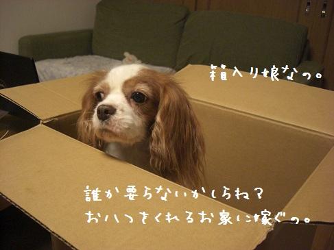 kuisinbo_01